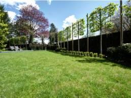 Plantation d'arbres palisses chez un particulier à Villeneuve d'Ascq