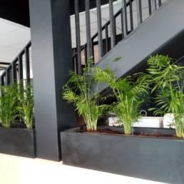 Installation de bacs à plantes - Végétalisation bureaux à Lille