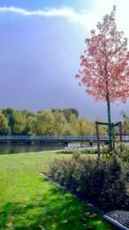 Entretien des espaces verts pour les entreprises et copropriétés