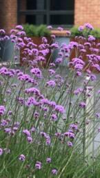 Entretien jardin ouvrier paysagiste