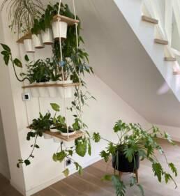 Plante d'intérieur pour bureaux
