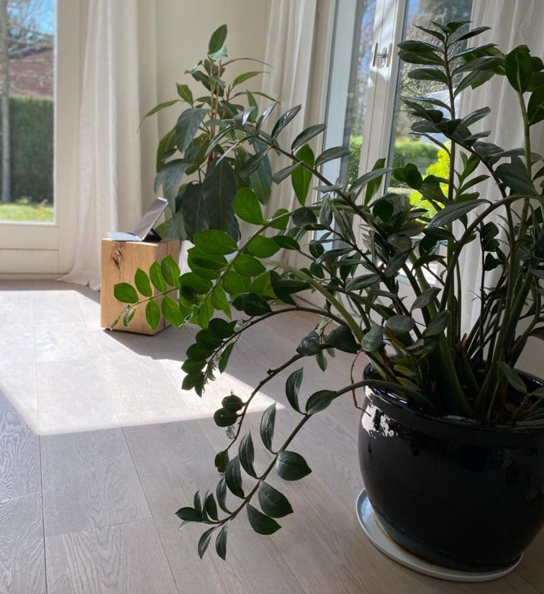 aménagement bureau plantes intérieur