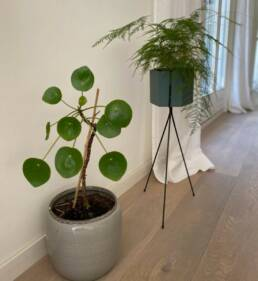 Plante intérieur de bureau