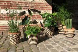 Plante d'intérieur pour bureau - Aménagement bureau