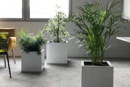 Végétalisation espace intérieur entreprises